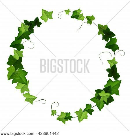 Ivy Leaf Round Vector Frame, Green Liana Wreath, Floral Climbing Plant Illustration Isolated On Whit