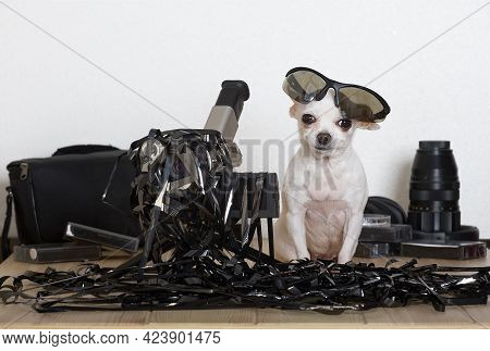 A White Chihuahua Dog With Glasses On Its Head Sits Entangled In Black Thin Video Tape, And Next To