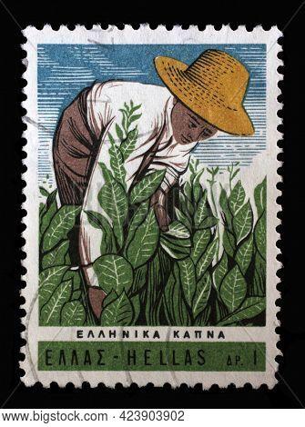 ZAGREB, CROATIA - JUNE 27, 2014: Stamp printed in Greece shows Scientific Tobacco Congress - Tending tobacco plants, circa 1966