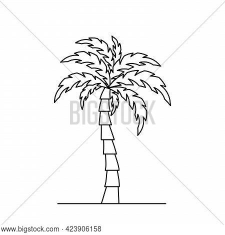 Palm Tree Icon. Linear Coconut Tree Icon. Vector Illustration. Palm Vector Icon. Black Linear Palm I