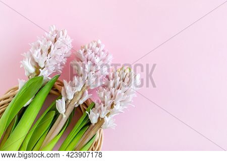 Happy Easter. Three Hyacinth Flowers On Pastel Pink Background With Copy Space For Text