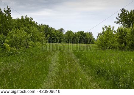 Pathway With Green Grasses In The Green Nature Background. The Narrow Road Path Way From The Wheels