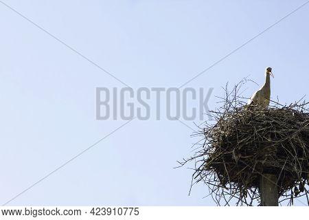 Stork On Nest Against Blue Sky. White Stork Living In Village In Ukraine. The Nest Of Stork In The W