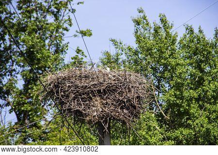 Stork On Nest Against Green Leaves. White Stork Living In Village In Ukraine. The Nest Of Stork In T