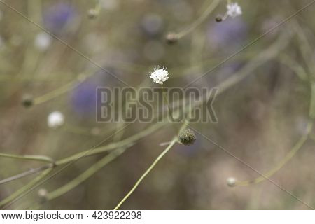 Abstract Light Floral Background With Small Flowers On A Blurred Background. Selective Focus.