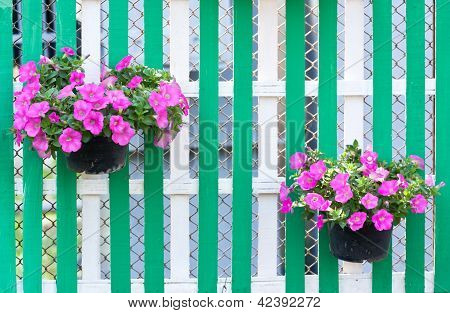 Flower In Pot On Wooden Fence