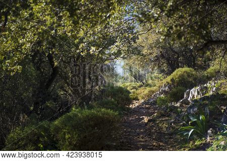 Mysterious And Fabulous Path Between Trees On The Lycian Way In Turkey