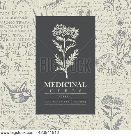 Botanical Vector Label Or Banner With Valerian On A Hand-drawn Background With Medicinal Herbs And H