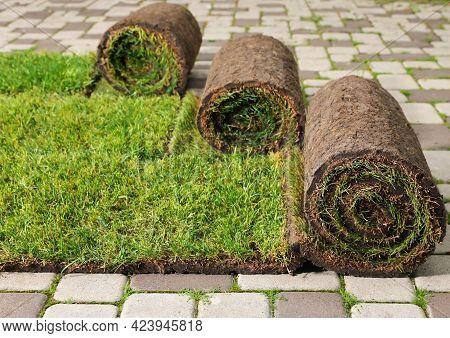 Many Grass Sods On Pavement In Backyard