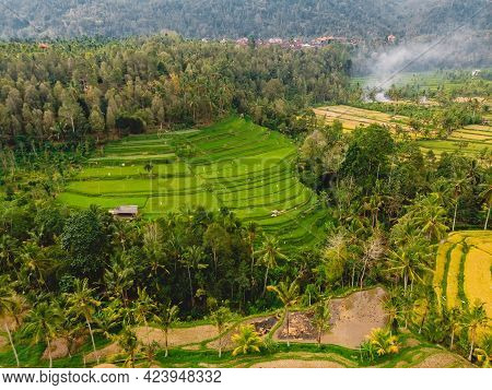 Rice Fields With Terraces In Central Bali Island. Aerial View