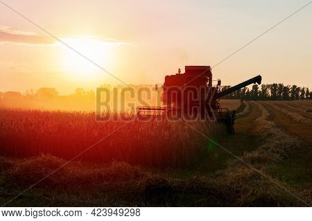 Harvester In A Wheat Field On A Sunset Background. Harvesting Campaign.