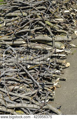Small Branches Are Tied In Bundles And Laid On Gray Concrete Floor. Use Of White Plastic Twine For B