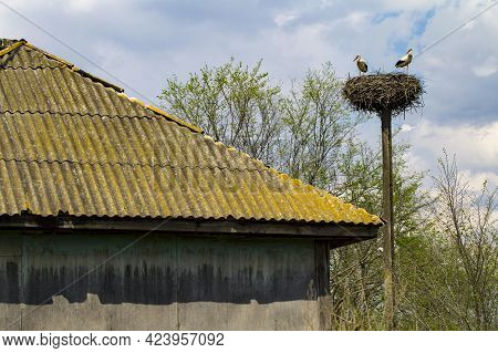 Two Stork On Nest. Stork Nest Over An Old House In The Village.