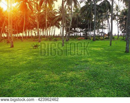 A Clearing With Clipped Green Grass And Coconut Trees Against The Setting Sun In Kerala. Travel Conc