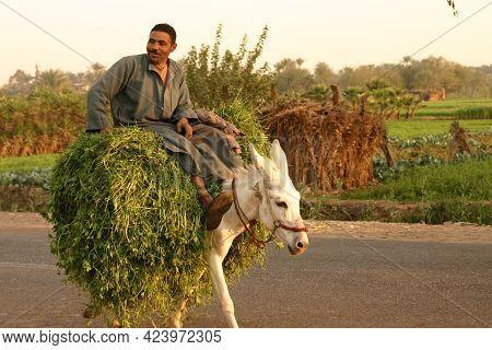 Cairo Egypt, November 28, 2007: Local Farmer Riding A Donkey Carrying Fresh Cut Alfalfa