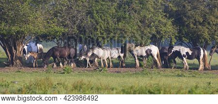 Field Full Of Horses And Ponys At Lydiard Park Swindon