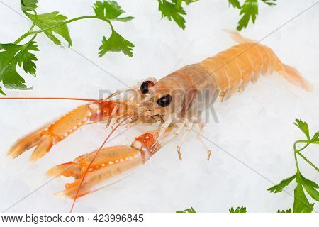 Fresh Norway Lobster On Crushed Ice With Green Decorative Parsley Leaves.
