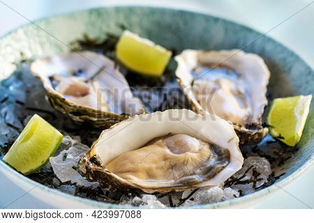 Macro Close Up Fresh Appetizing Oyster Starter On Ice With Lime Slices.