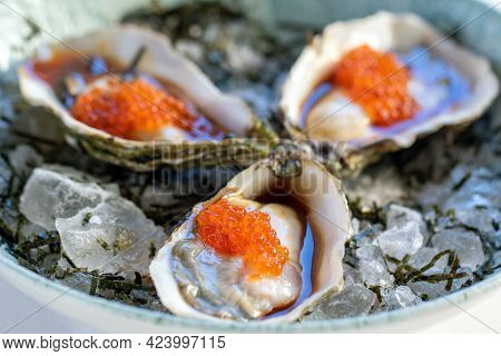Macro Close Up Of Fresh Appetizing Oysters With Orange Caviar And Ponzu Sauce Served On Crushed Ice.