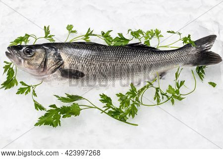 Close Up Side View Of Fresh Sea Bass On Crushed Ice With Decorative Green Parsley.