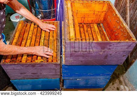 Above View On Elderly Woman, Beekeeper Who Is Taking Out The Wooden Frame With Honeycomb From Bee Hi