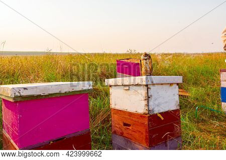 Beekeeper's Smoker Placed On Beehive On The Meadow, Bee Farm.