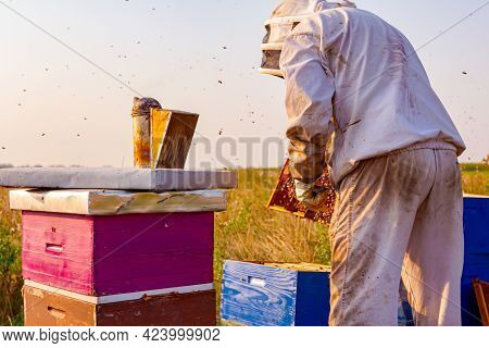 Beekeeper Is Taking Out The Honeycomb On Wooden Frame To Control Situation In Bee Colony.
