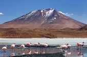 Bolivia the most beautifull Andes in South America. The surreal landscape is nearly treeless punctuated by gentle hills and volcanoes near Chilean border. The flamencos on the laguna Hedionda poster