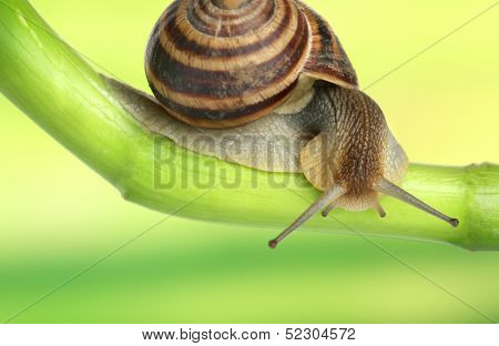 Snail crawling on green stem of plant on bright background poster