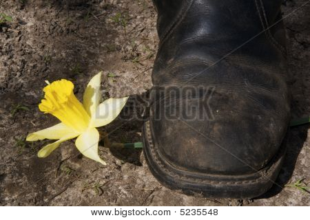 Boot Crushing A Flower (conceptual Photo)