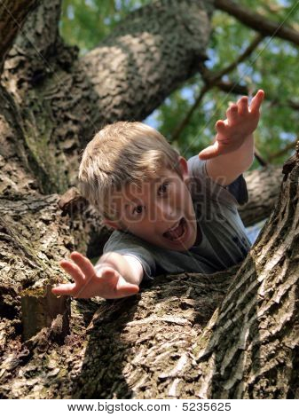 Tree Captures Boy