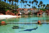 The pond with sharks in Paradise Island resort The Bahamas. poster