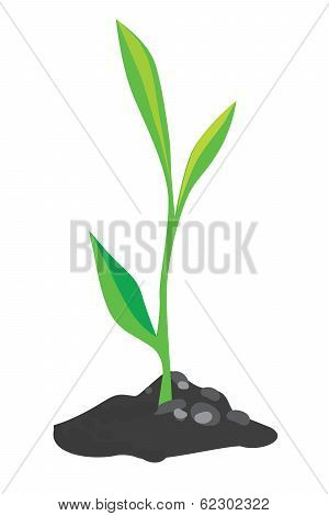 Growing Green Sprout