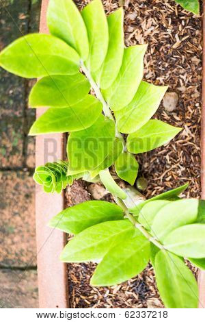 Group Of Fresh Green Leaves Plant