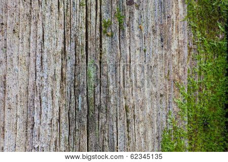 Old Wooden Wall With Green Moss