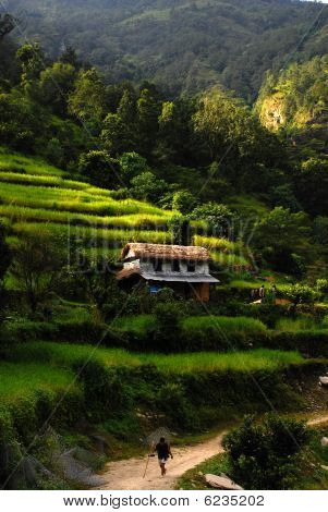 rice terraces landscapes of nepal