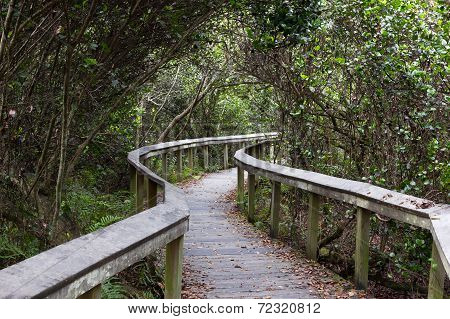 Observation Trail, Everglades