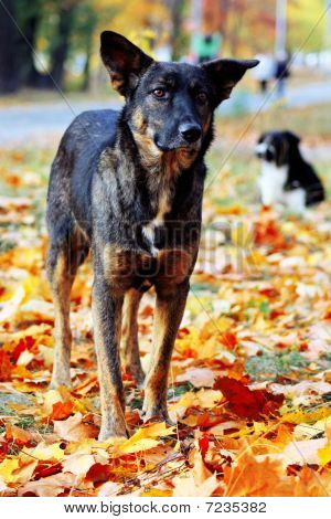 Dog in brightly colored autumn leaves