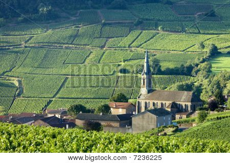 Vergisson with vineyards Burgundy France