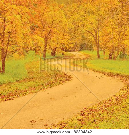Walnut trees and footpath in autumn, colorful yellow and red leaves, large detailed outdoor scene, old pathway in woods, aged weathered tarmac asphalt trail, peaceful tranquil arboretum garden, park walk pavement, promenade road, forest sidewalk landscape poster