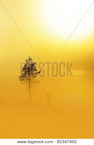 Pine Tree In Heavy Fog At Dawn