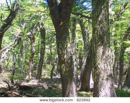 treesfreshair