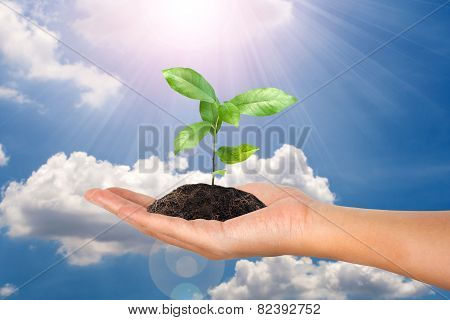 Small Plant In Female Hand On Cloud And Sky Concept