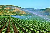 Greening Crops