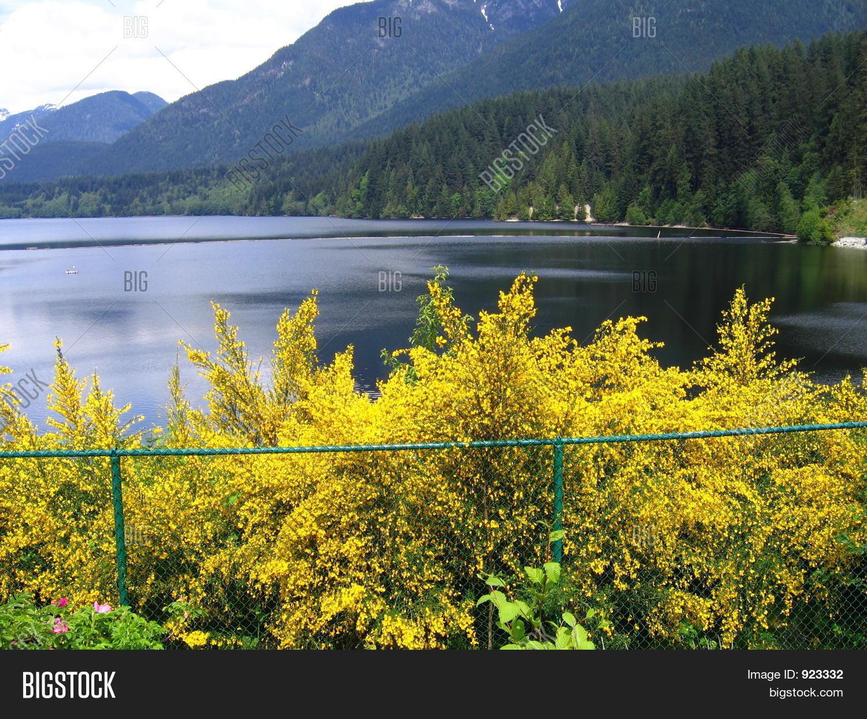 Spring Lake Blossoming Image Photo Free Trial Bigstock