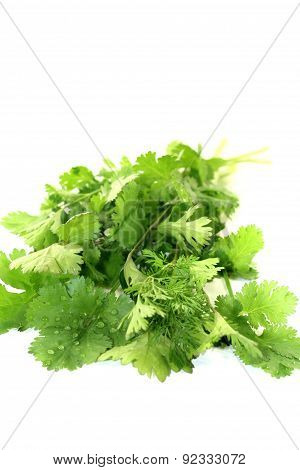 Fresh Green Bunch Of Coriander