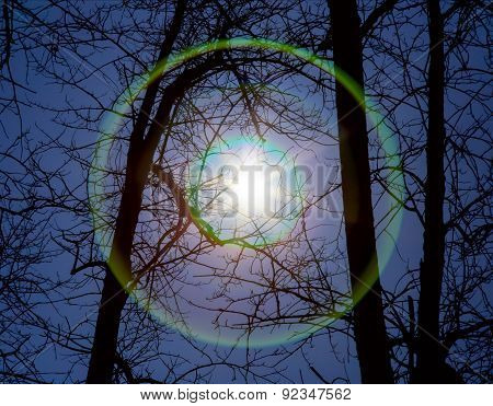 Sun Or Another Star Shines Through The Trees With Lens Flare
