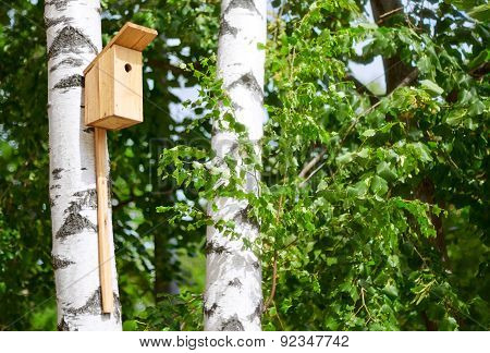 Nesting Box On The Tree In The Park