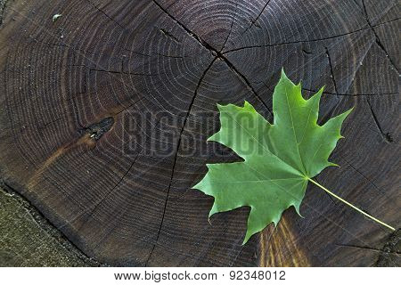 Fresh Green Maple Leaf On Wooden Stock