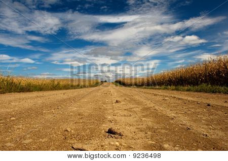 Old Farm Road at Harvest Time